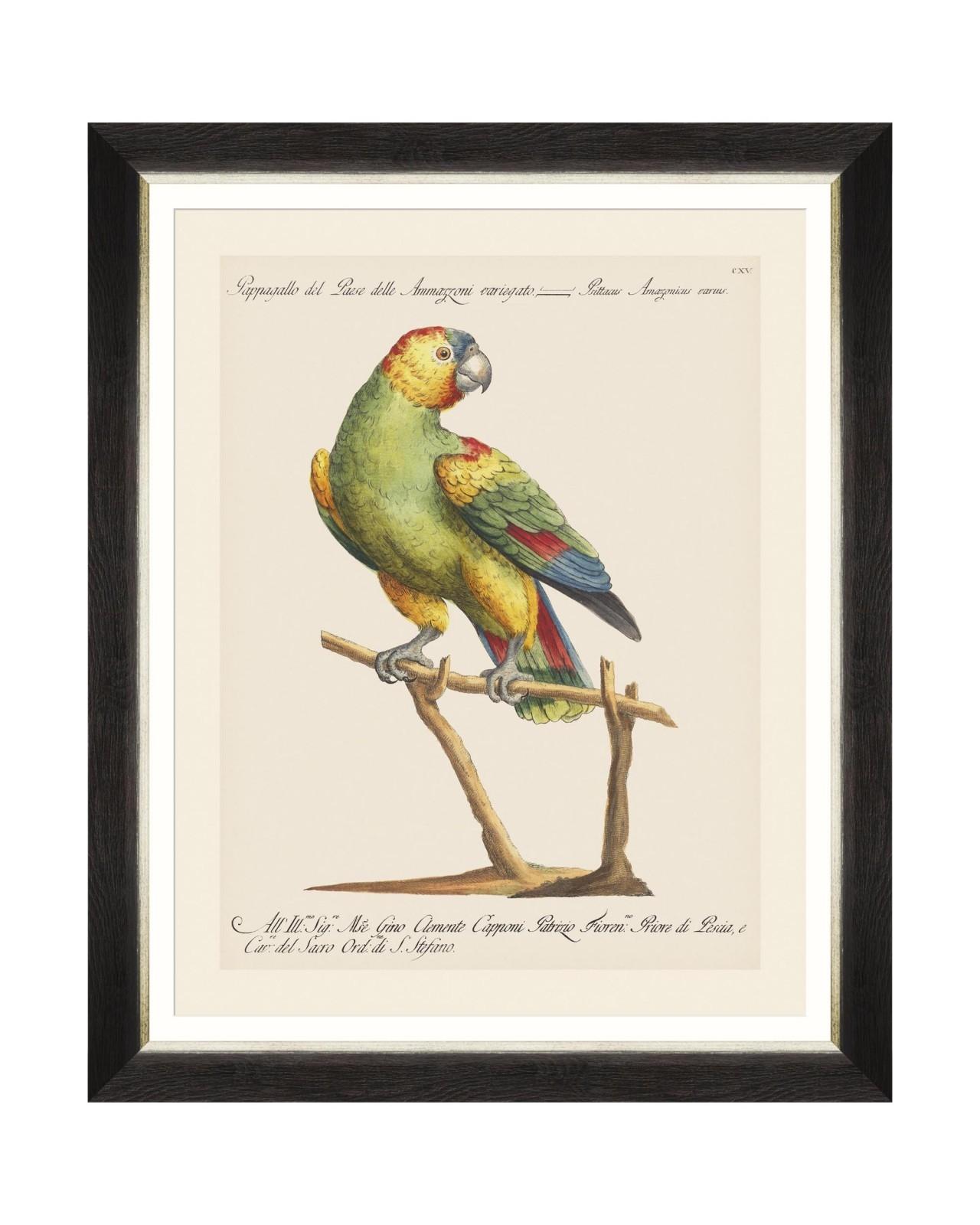 Tablou Framed Art Parrots Of Brasil VII, 40 x 50 cm imagine