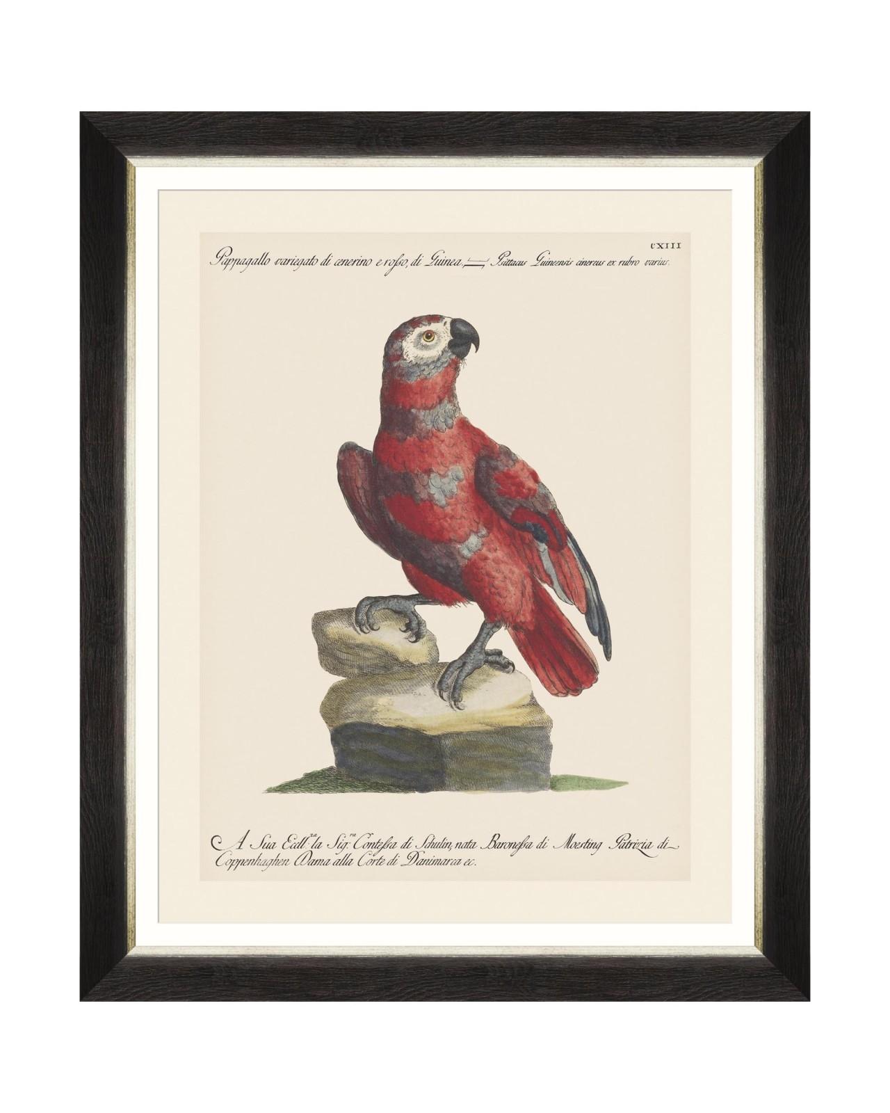 Tablou Framed Art Parrots Of Brasil X, 40 x 50 cm imagine