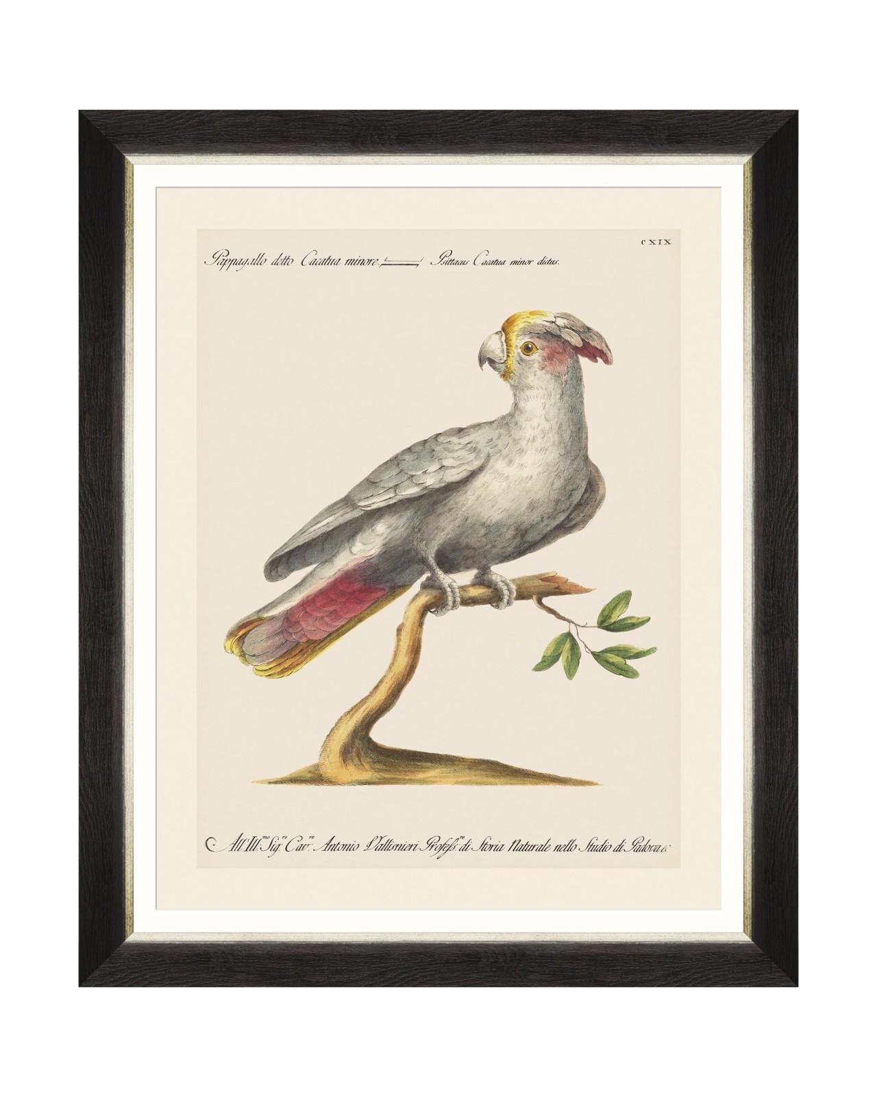 Tablou Framed Art Parrots Of Brasil XI, 40 x 50 cm imagine
