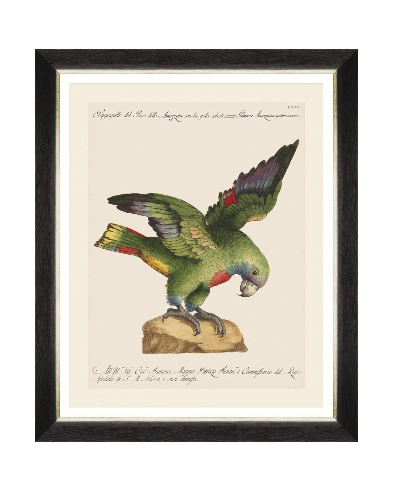 Tablou Framed Art Parrots Of Brasil XII, 40 x 50 cm imagine