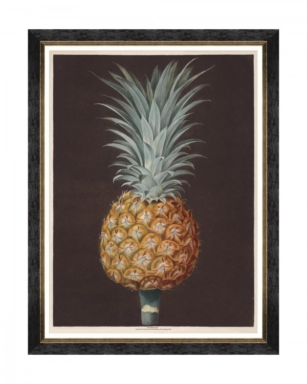 Tablou Framed Art Pineapples Of Antigua – The Antigua Pine By Brookshaw, 60 x 80 cm