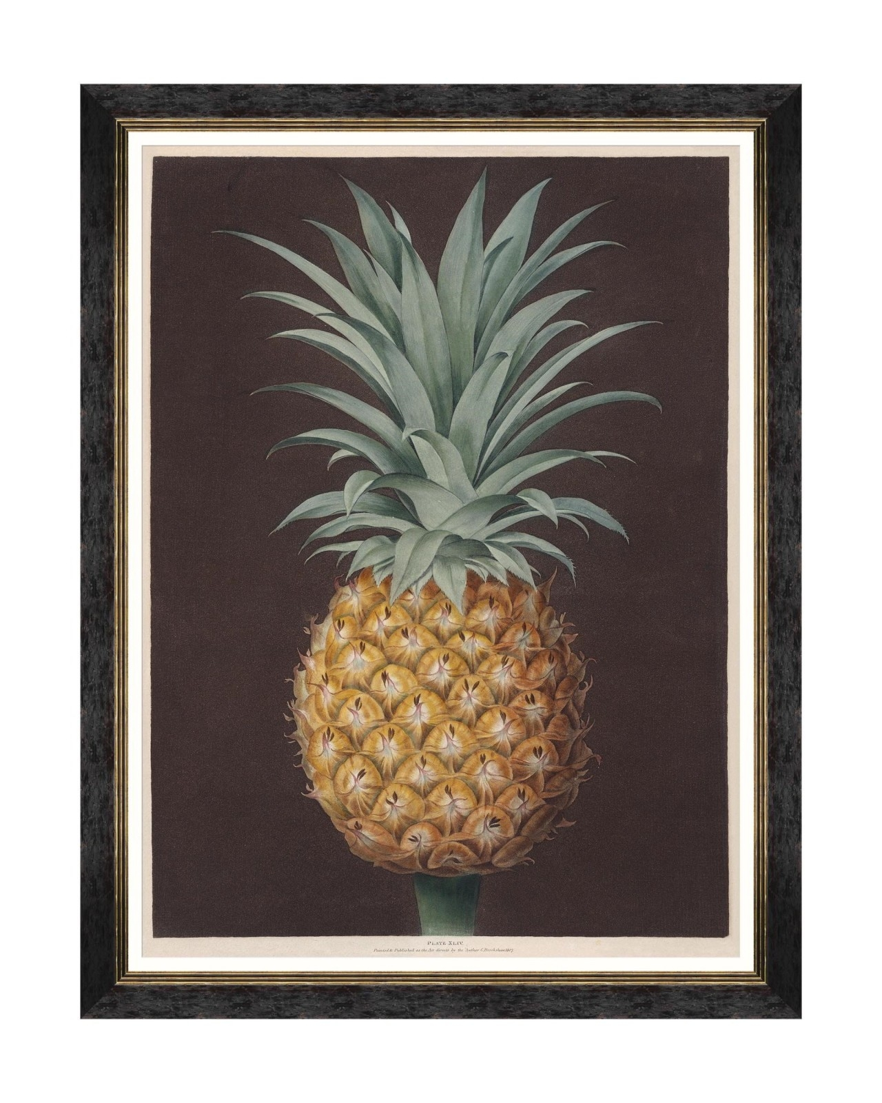 Tablou Framed Art Pineapples Of Antigua – The Havannah Pine By Brookshaw, 60 x 80 cm
