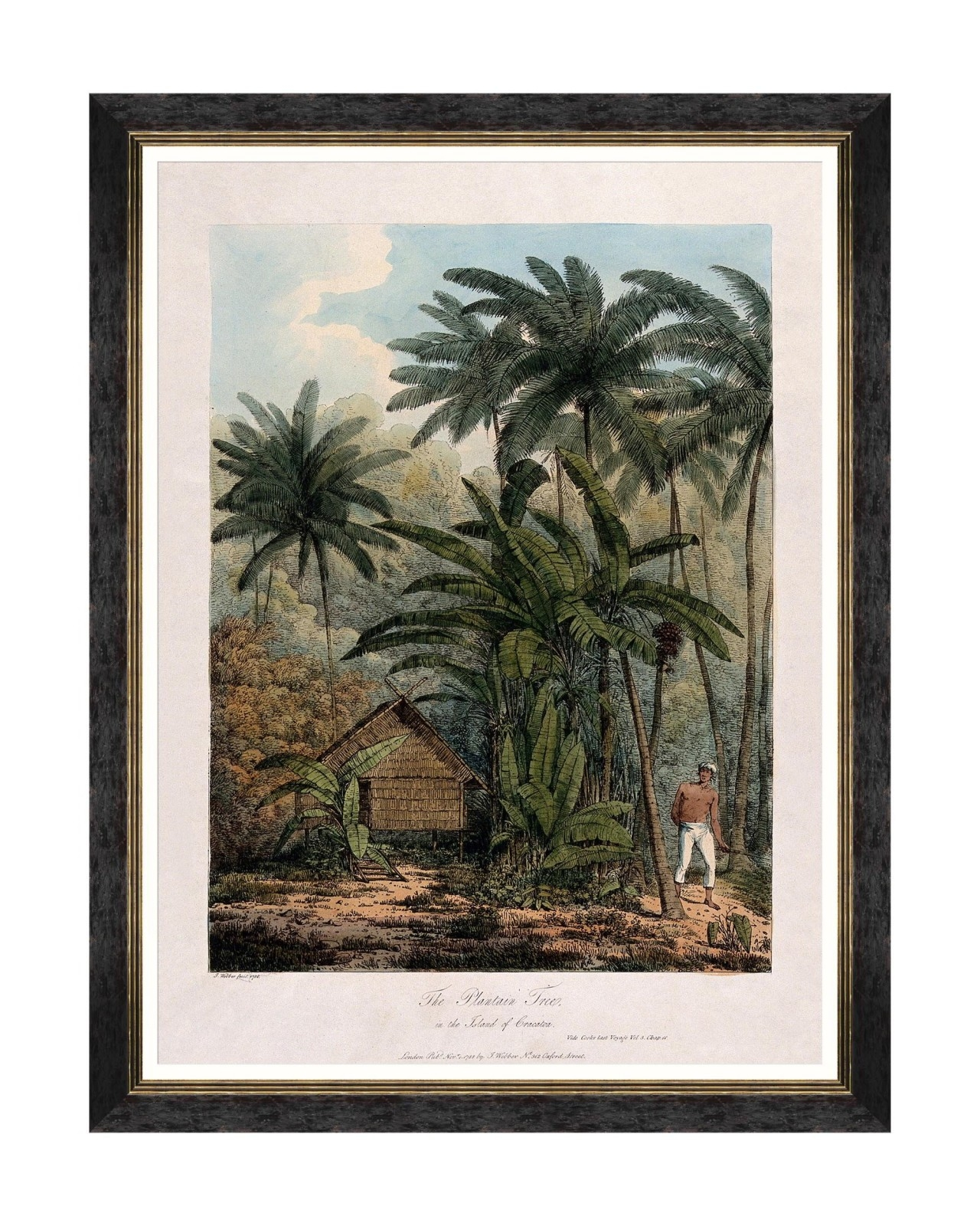 Tablou Framed Art Trees Of Krakatoa – The Plantain Tree, 60 x 80 cm