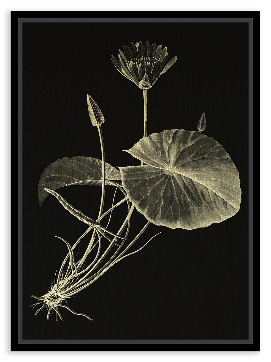 Tablou pe metal striat auriu Egyptian Lotus By F. Jomard