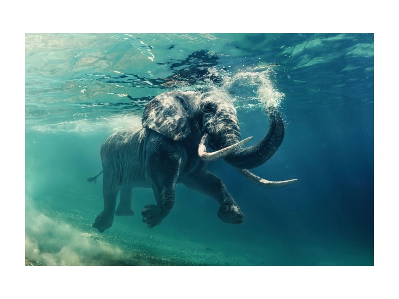 Tablou Sticla Elephant, 120 x 80 cm imagine