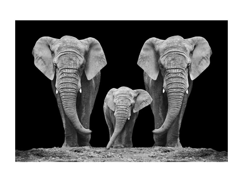 Tablou Sticla Elephant Family, 120 x 80 cm
