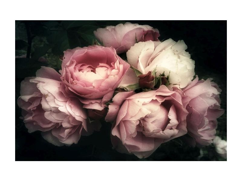 Tablou Sticla Flowers I