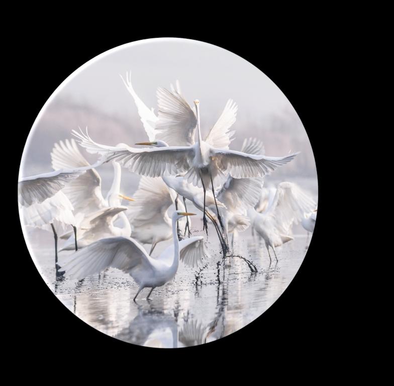 Tablou Sticla Glasspik Ringart GR011 Herons, Ø70 cm poza