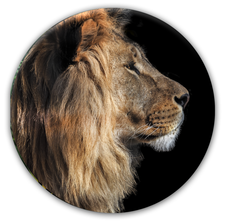 Tablou Sticla Glasspik Ringart GR017 Black Lion O70 cm