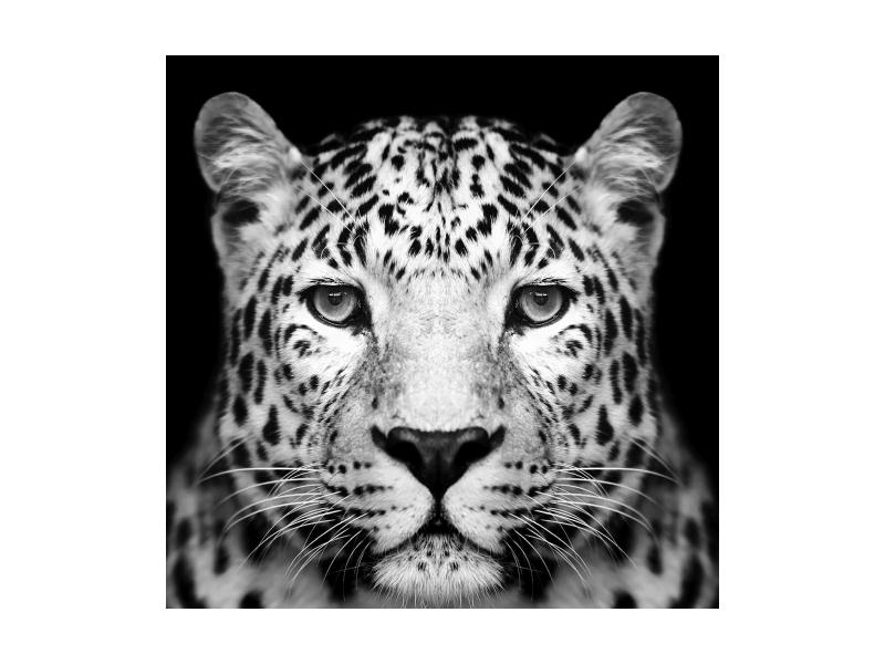 Tablou Sticla Panther, 80 x 80 cm
