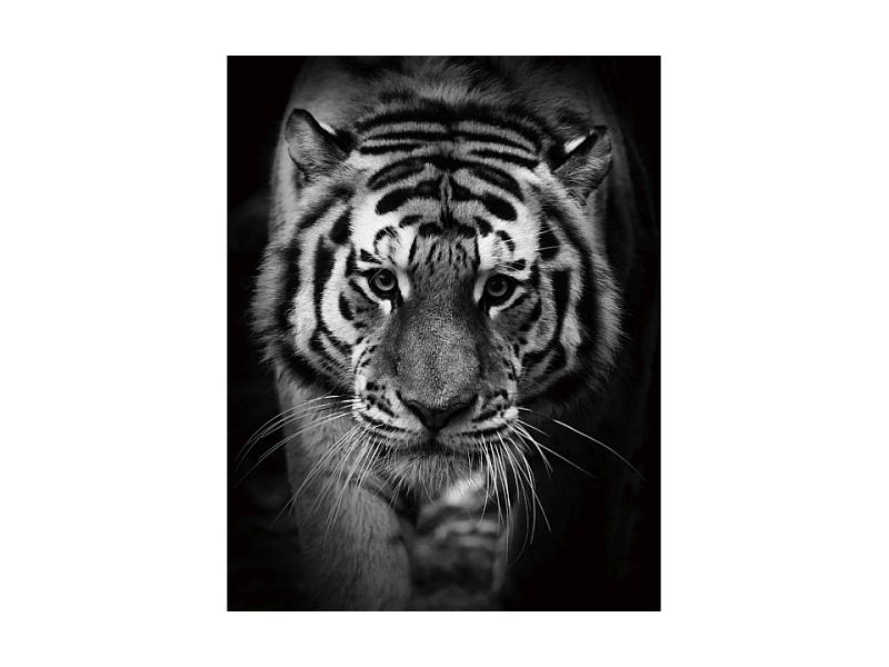 Tablou Sticla Tiger, 80 x 120 cm imagine