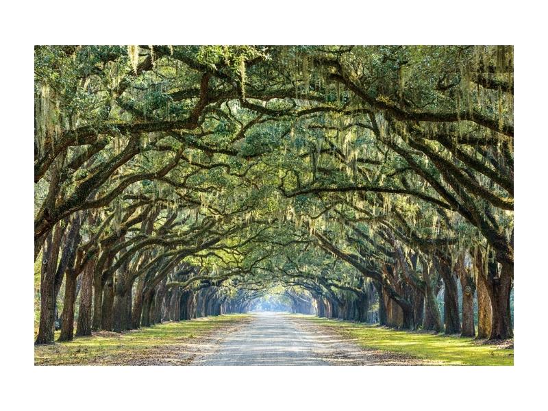 Tablou Sticla Trees I, 120 x 80 cm imagine