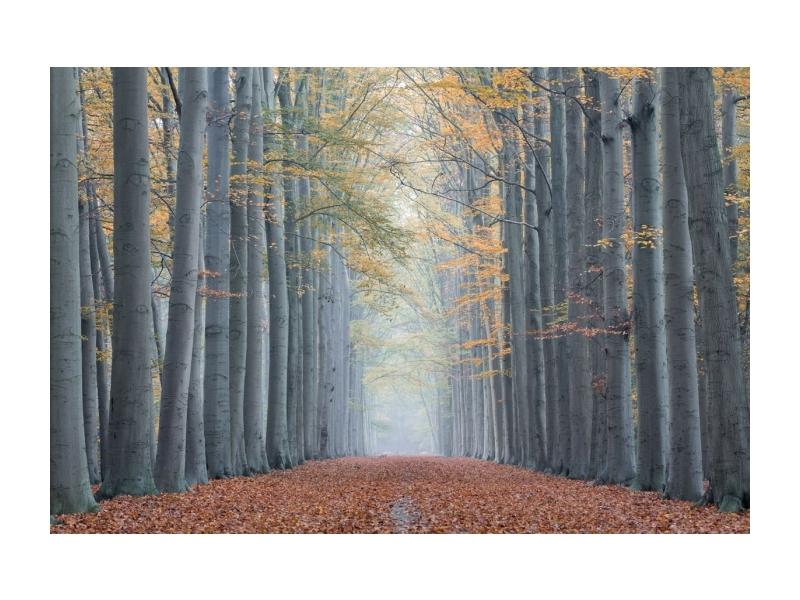 Tablou Sticla Trees