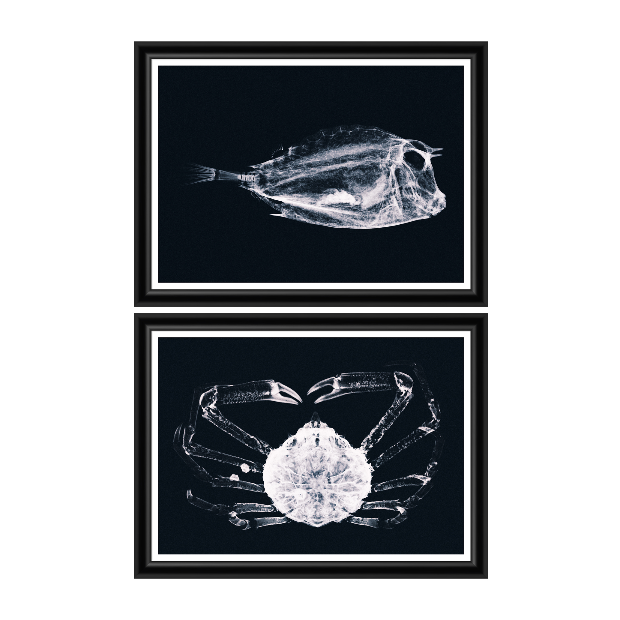 Tablou 2 piese Framed Art X Ray Ocean Species din categoria Tablouri Inramate