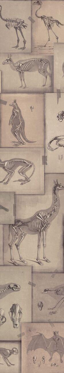 Set 3 role Tapet Imprimat Digital Zooarchaeology